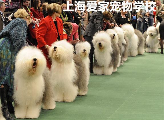 全国画动物比赛一等奖